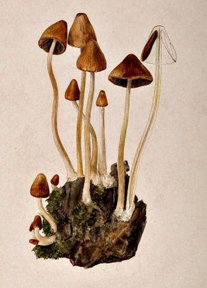 10-funghi